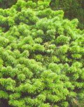 Ландшафтный дизайн. Декоративные растения
