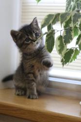 Отдадим котят в добрые руки,  Кобрин