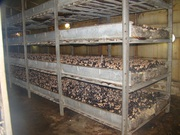 Участок с теплицами для выращивания шампиньонов